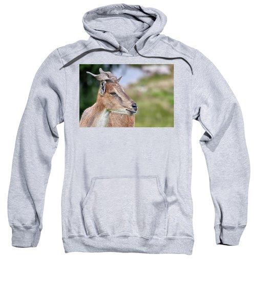 Markhor Sweatshirt