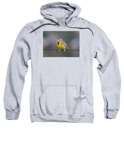 Meadowlark On Barbed Wire Sweatshirt by Marc Crumpler