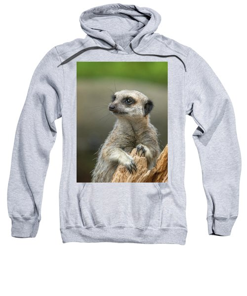 Meerkat Model Sweatshirt