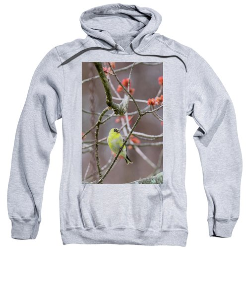 Sweatshirt featuring the photograph Molting Gold Finch by Bill Wakeley