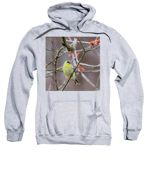 Sweatshirt featuring the photograph Molting Gold Finch Square by Bill Wakeley