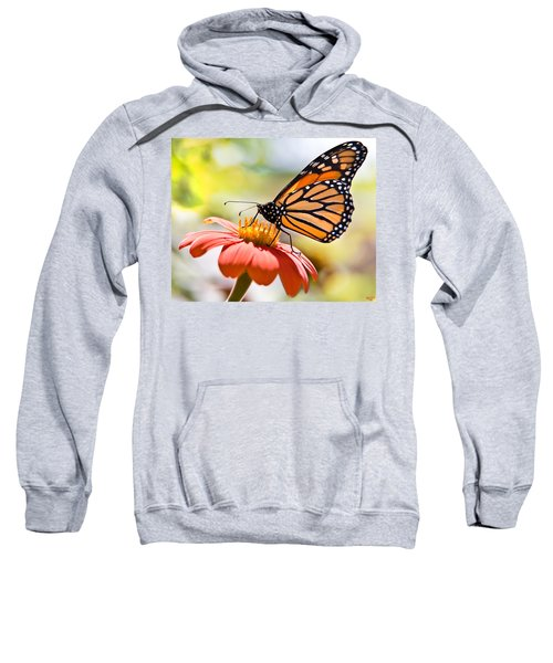 Monarch Butterfly Sweatshirt