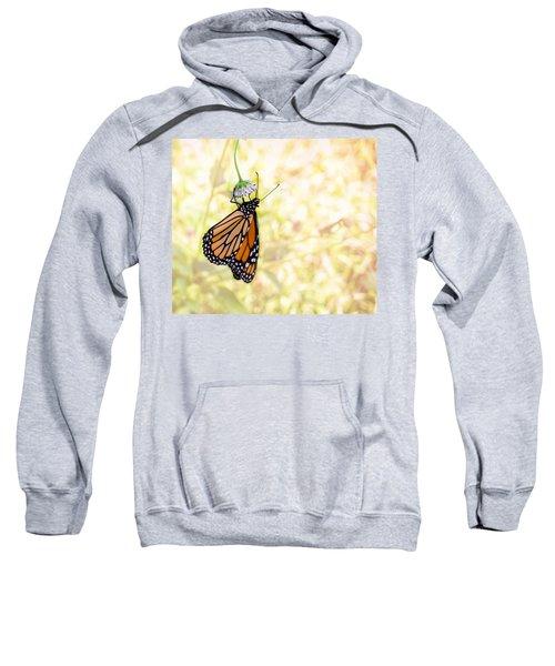 Monarch Butterfly Hanging On Wildflower Sweatshirt
