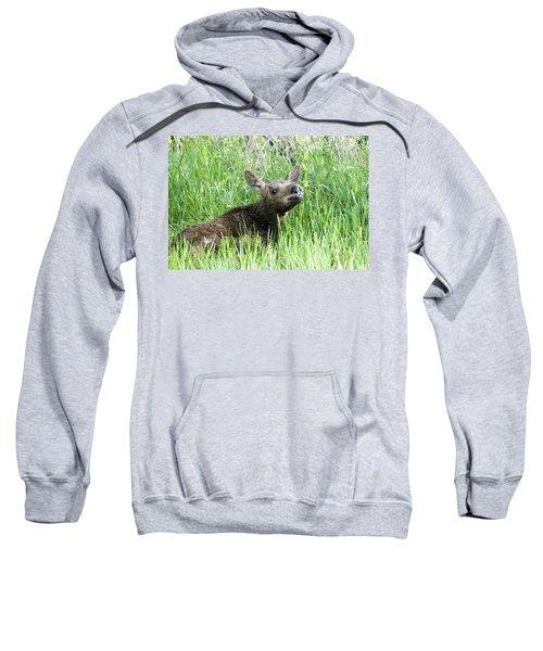 Moose Baby Sweatshirt