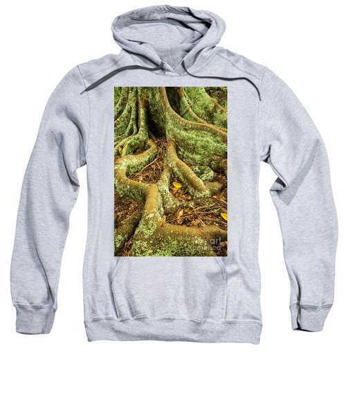 Sweatshirt featuring the photograph Moreton Bay Fig by Werner Padarin