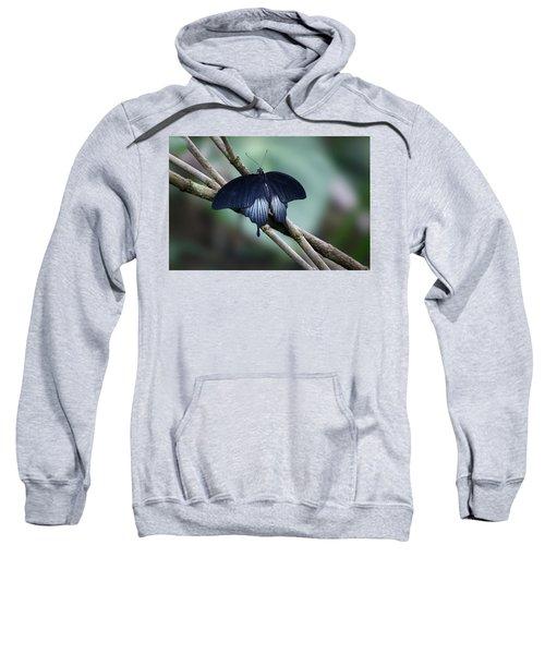 Great Mormon Butterfly Sweatshirt