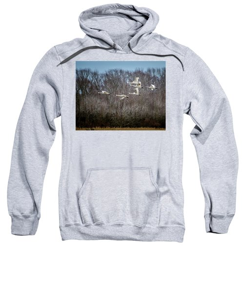Morning Flight Of Tundra Swan Sweatshirt