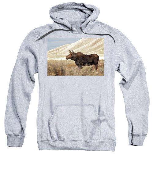 Morning Moose Sweatshirt