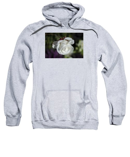 Morning Rose Sweatshirt