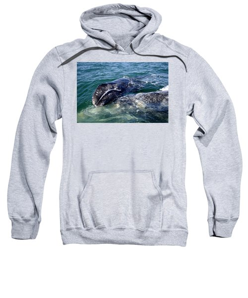 Mother Grey Whale And Baby Calf Sweatshirt