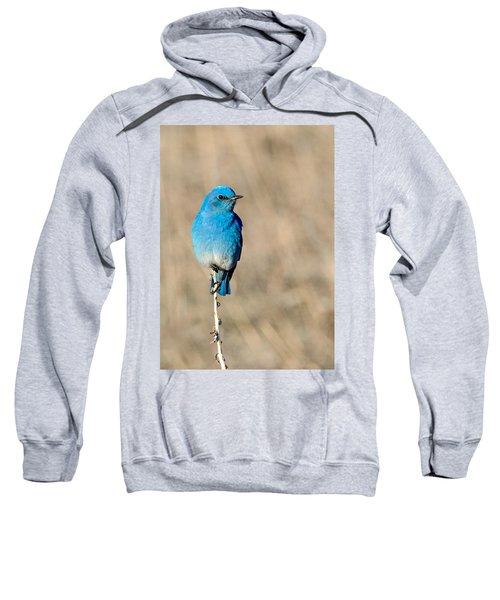 Mountain Bluebird On A Stem. Sweatshirt