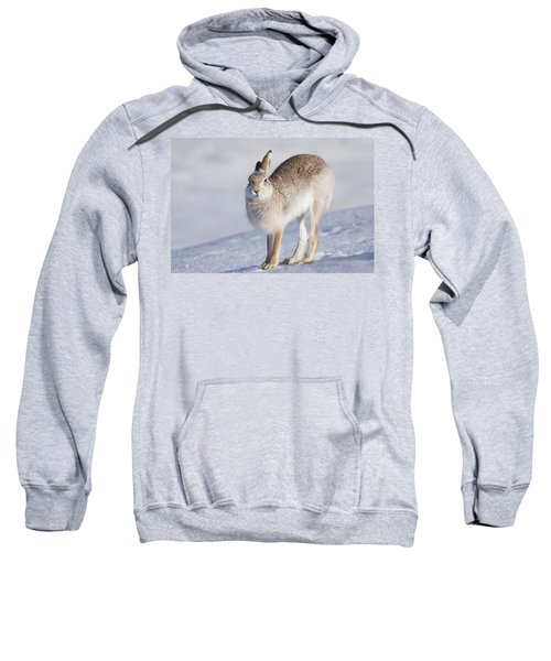 Mountain Hare In The Snow - Lepus Timidus  #2 Sweatshirt