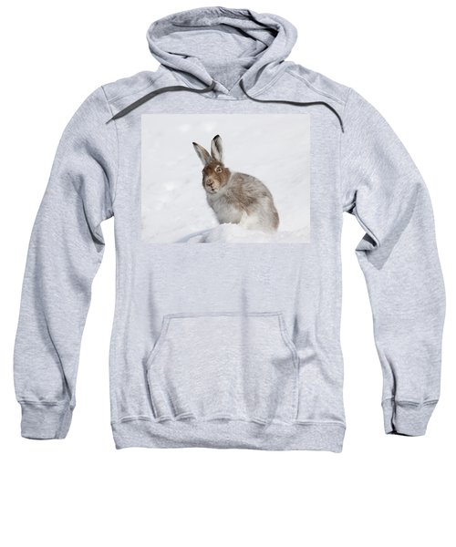 Mountain Hare In Winter Sweatshirt