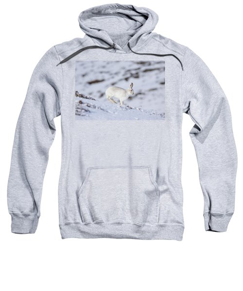 Mountain Hare - Scottish Highlands  #12 Sweatshirt