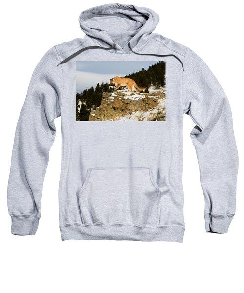 Mountain Lion On Rocks Sweatshirt