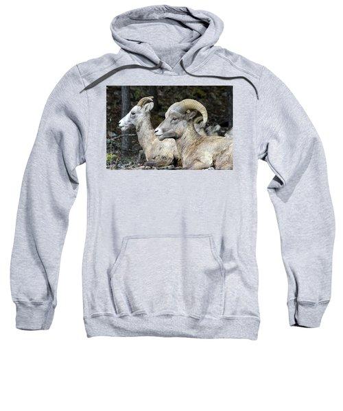 Mt Sheep  Sweatshirt