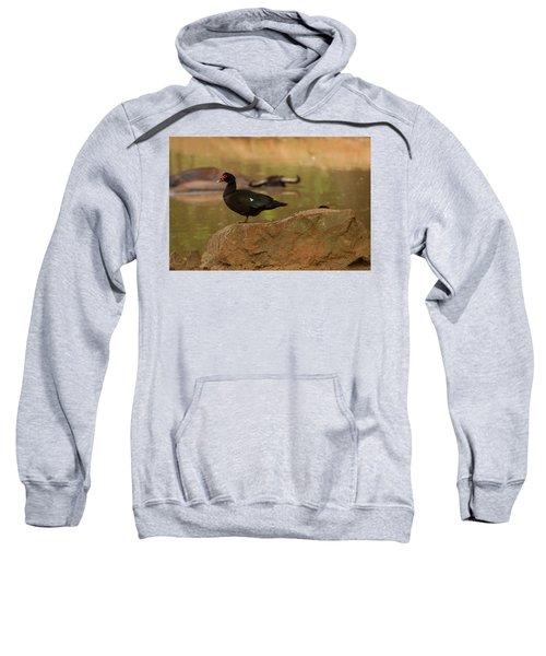 Muscovy Duck Sweatshirt