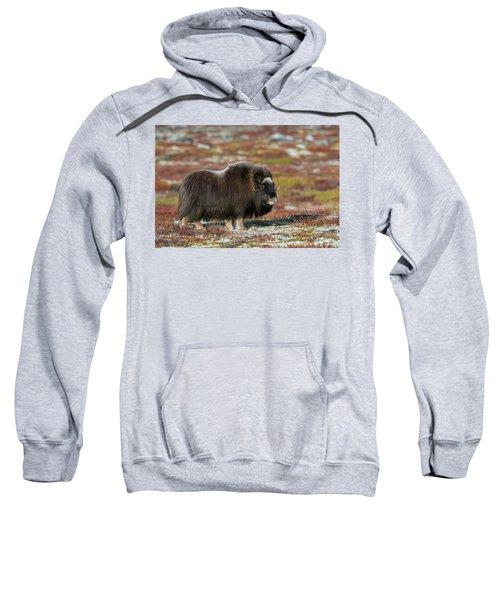 Muskox Sweatshirt