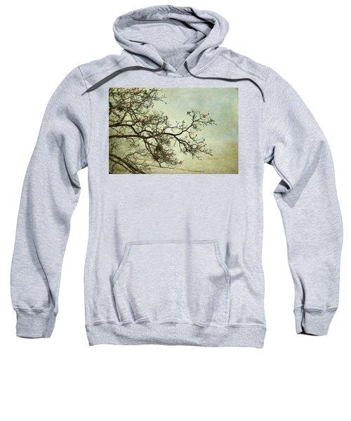Nearly Bare Branches Sweatshirt