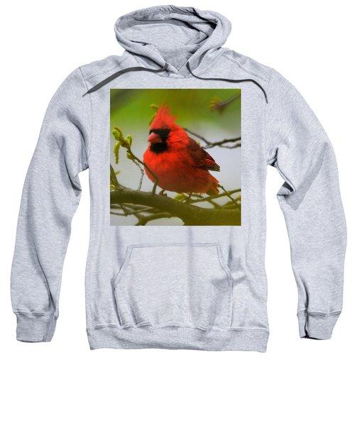 North Carolina Cardinal Sweatshirt