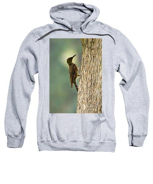 Northern Flicker Halo Sweatshirt