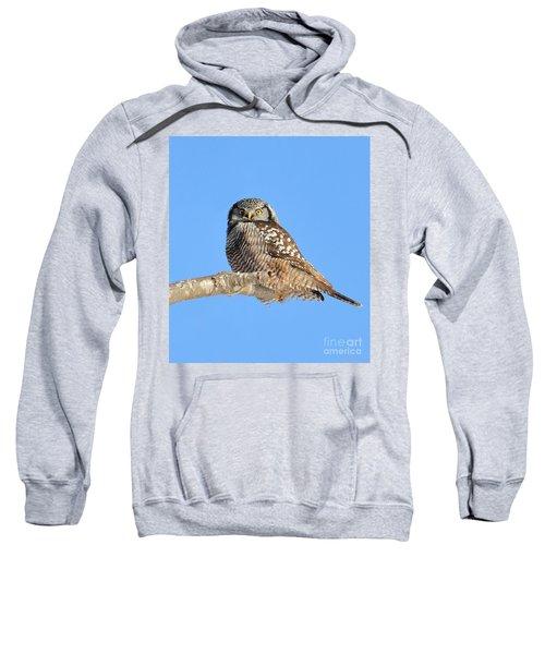 Northern Hawk-owl On Limb Sweatshirt