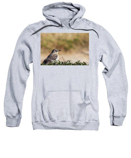 Northern Mockingbird Sitting On Top Of A Hedge Sweatshirt