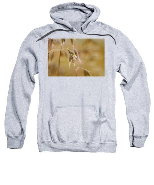 Summer Oat Sweatshirt