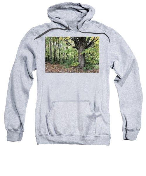October Trees Sweatshirt