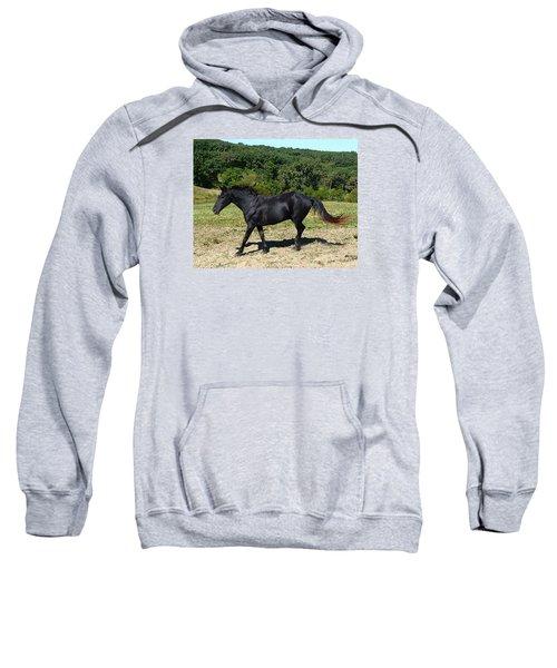 Old Black Horse Running Sweatshirt