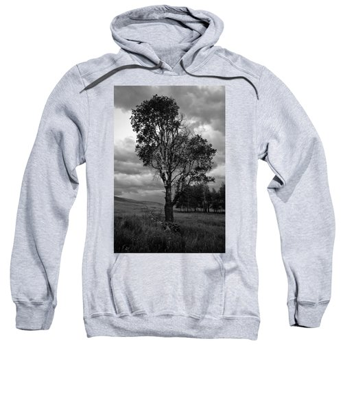 Old Tree, Lost Trail Wildlife Refuge Sweatshirt