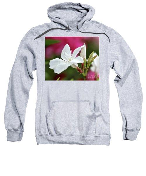 Oleander Casablanca 2 Sweatshirt