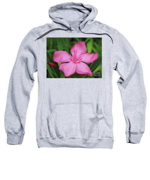 Oleander Professor Parlatore 2 Sweatshirt