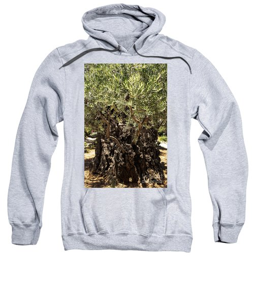 Sweatshirt featuring the photograph Olive Tree by Mae Wertz