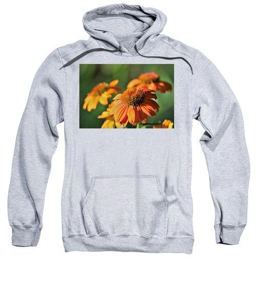 Orange Cone Flowers In Morning Light Sweatshirt