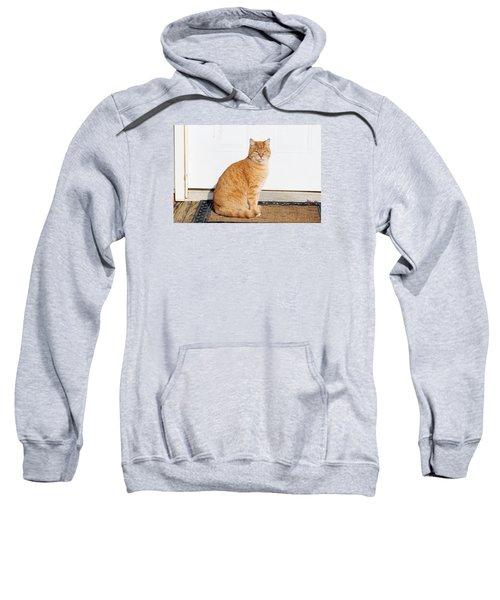 Orange Tabby Cat Sweatshirt
