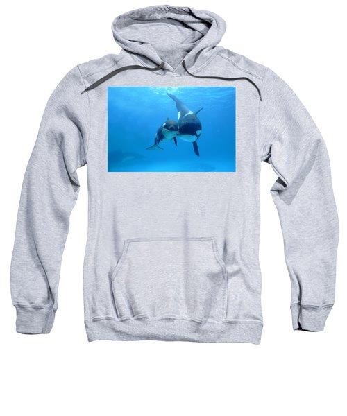 Orca Orcinus Orca Mother And Newborn Sweatshirt