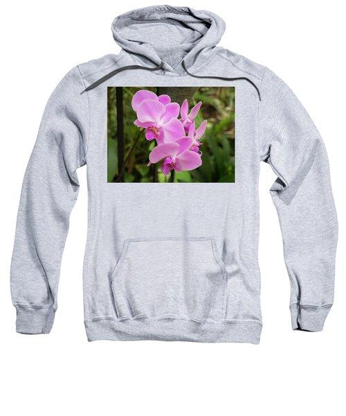 Orchid #6 Sweatshirt