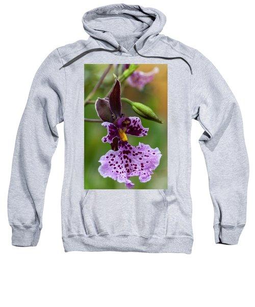 Orchid - Caucaea Rhodosticta Sweatshirt