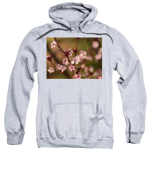 Purple Leaf Sandcherry Blossoms 2 Sweatshirt