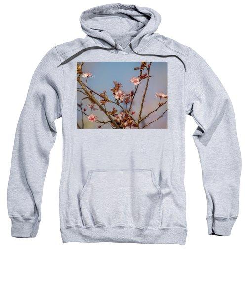 Purple Leaf Sandcherry Blossoms Sweatshirt