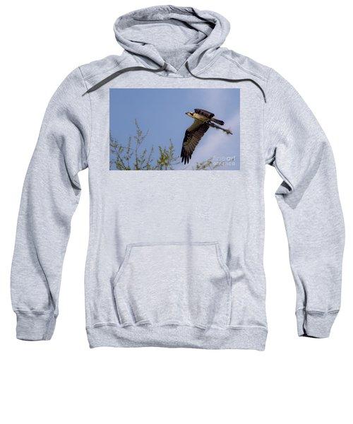 Osprey Collecting Sticks Sweatshirt