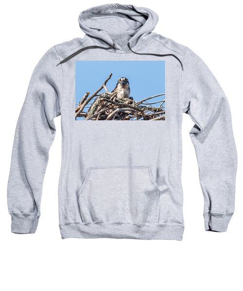 Osprey Eyes Sweatshirt