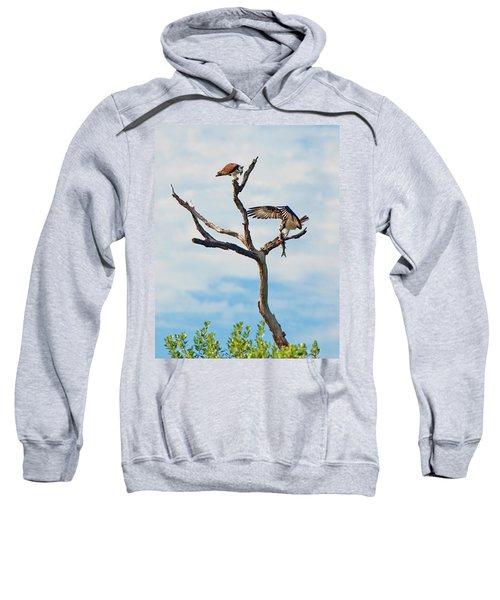 Osprey Feast Sweatshirt