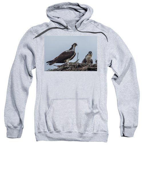 Osprey On A Nest Sweatshirt