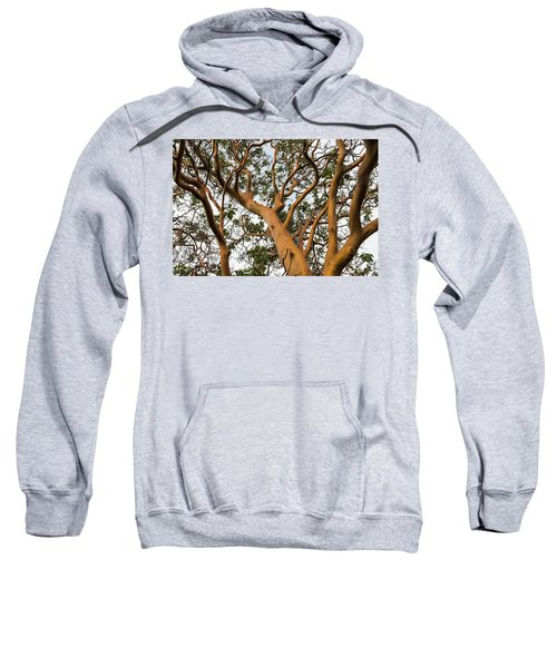 Pacific Madrone Trees Sweatshirt