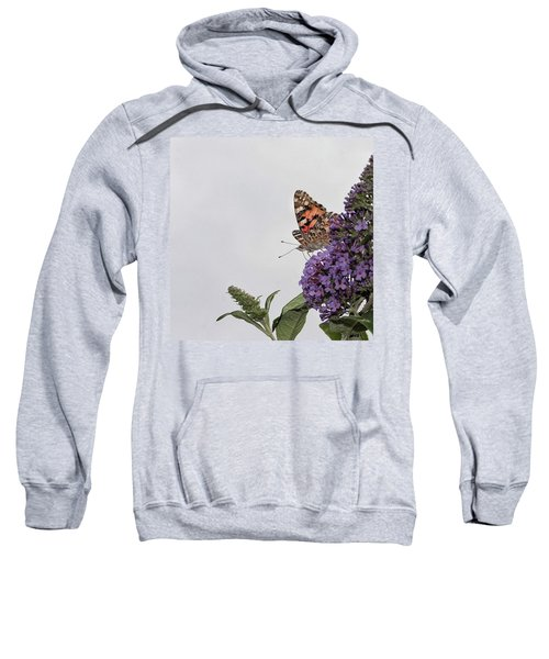Painted Lady (vanessa Cardui) Sweatshirt by John Edwards