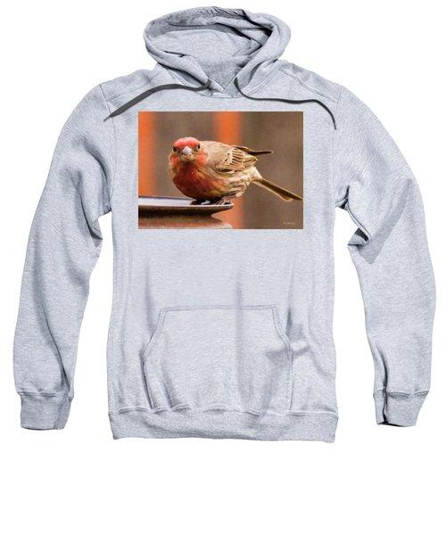 Painted Male Finch Sweatshirt