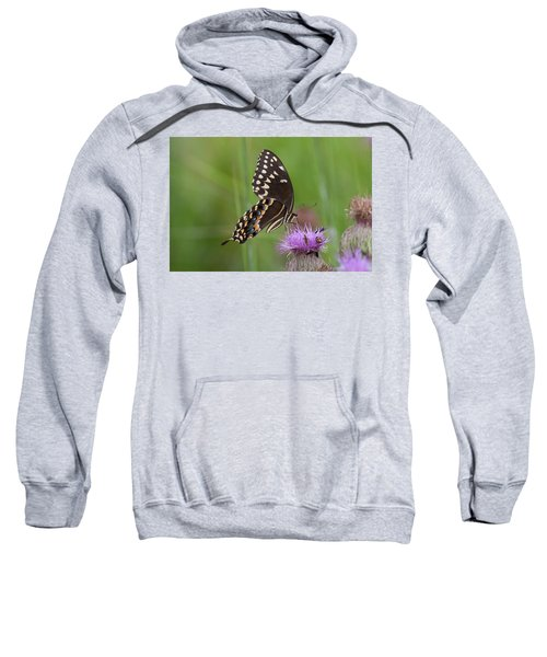 Palamedes Swallowtail And Friends Sweatshirt