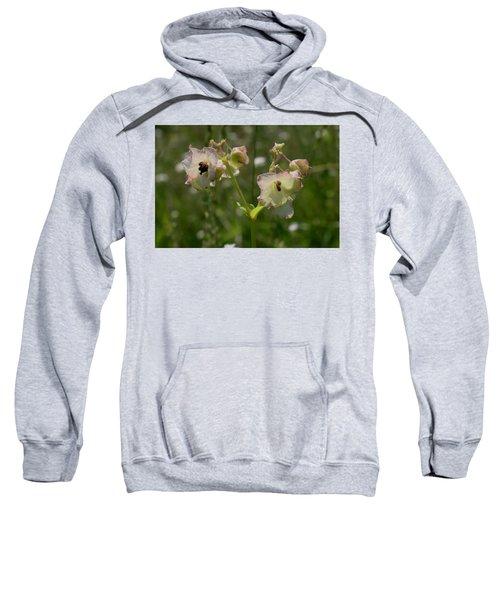 Pale Umbrella Wort Sweatshirt